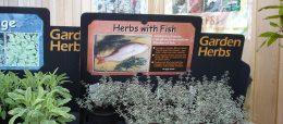 HerbswithFish